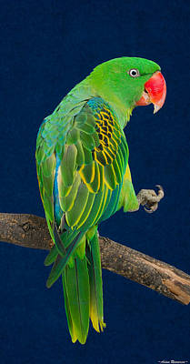 Great-billed Parrot 1 Art Print