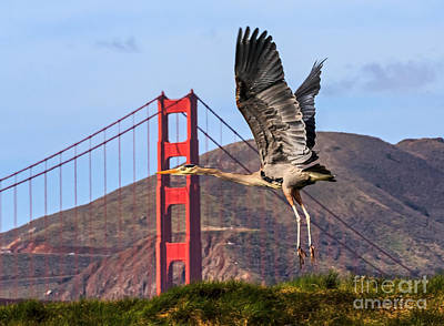 Beers On Tap - Great Blue at the Golden Gate by Kate Brown