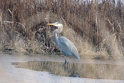 Photograph - Great Blue Heron - 0024 by S and S Photo