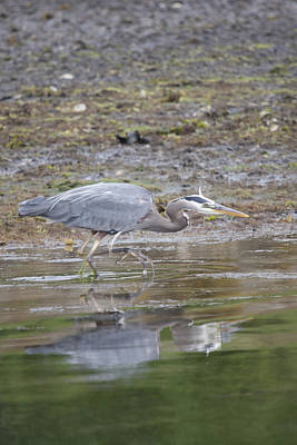 Photograph - Great Blue Heron - 0036 by S and S Photo