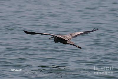 Photograph - Great Blue Heron 01 by E B Schmidt