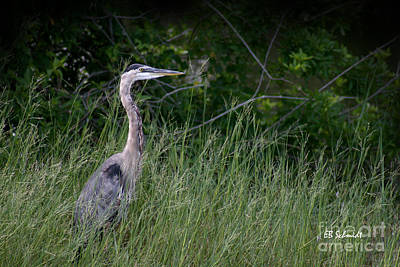 Photograph - Great Blue Heron 02 by E B Schmidt