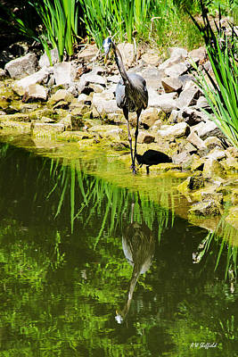 Photograph - Great Blue Heron 2 by Allen Sheffield