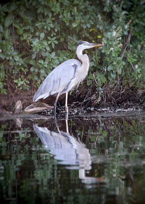 Photograph - Great Blue Heron 2 by Jemmy Archer