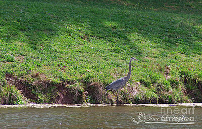 Photograph - Great Blue Heron 20120421_153a by Tina Hopkins
