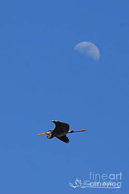 Photograph - Great Blue Heron 20120429_242a by Tina Hopkins