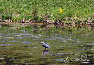 Photograph - Great Blue Heron 20120430a_14a by Tina Hopkins
