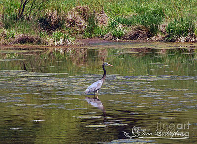 Photograph - Great Blue Heron 20120430a_35a by Tina Hopkins