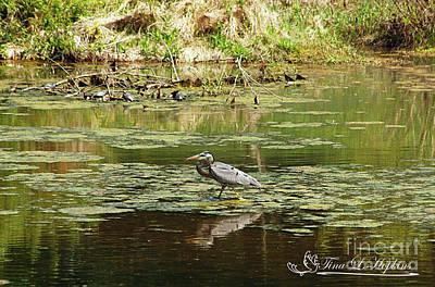 Photograph - Great Blue Heron 20120430a_69a by Tina Hopkins