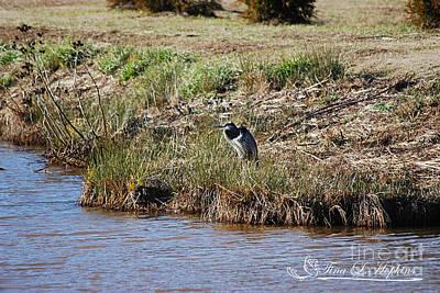 Photograph - Great Blue Heron 20131224_100 by Tina Hopkins