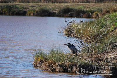 Photograph - Great Blue Heron 20131224_104 by Tina Hopkins