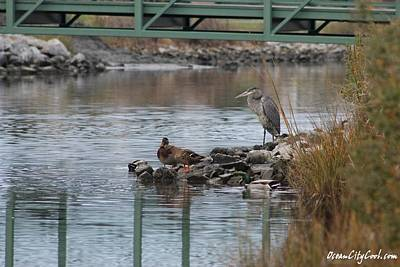 Print featuring the photograph Great Blue Heron And Friends by Robert Banach