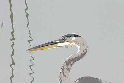 Bob Wade Photograph - Great Blue Heron And Rushes by Bob and Jan Shriner