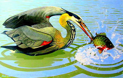 Painting - Great Blue Heron And Sunfish by Buzz Coe