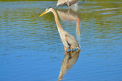 High Iso Photograph - Great Blue Heron As The Tide Comes In by Chris Tennis