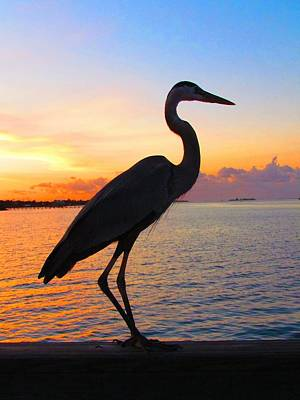 Photograph - Great Blue Heron At Sunset by Carol Montoya