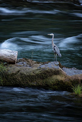 Photograph - Great Blue Heron by Belinda Greb
