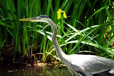 Photograph - Great Blue Heron By Yellow Flower by Marilyn Burton