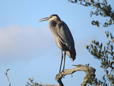 Photograph - Great Blue Heron by Ellen Meakin