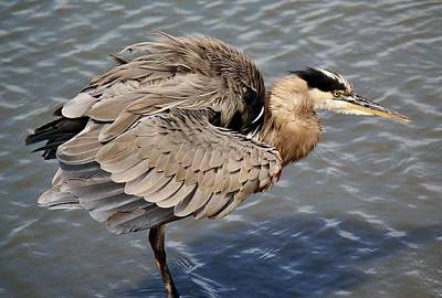Great Blue Heron Feathers - # 24 Art Print by Paulette Thomas