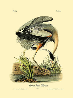 Engraving Digital Art - Great Blue Heron by Gary Grayson