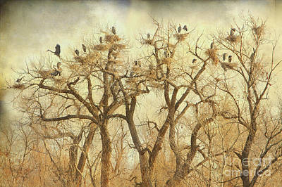 Bo Insogna Photograph - Great Blue Heron Hangout Fine Art by James BO  Insogna