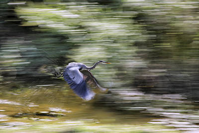 Photograph - Great Blue Heron In Flight by Jason Politte