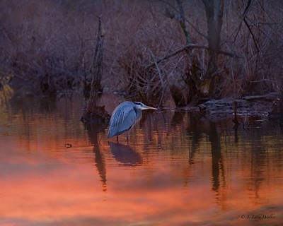 Digital Art - Great Blue Heron by J Larry Walker