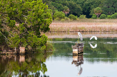 Photograph - Great Blue Heron On The Old Trestle by Scott Hansen