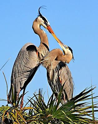 Photograph - Great Blue Heron Pair by Ira Runyan