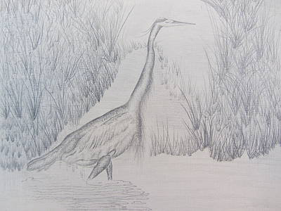 Drawing - Great Blue Heron Pencil Drawing by Debbie Nester