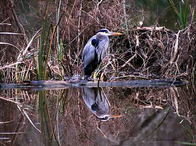 Great Blue Heron Reflecting Art Print by Gene Chauvin