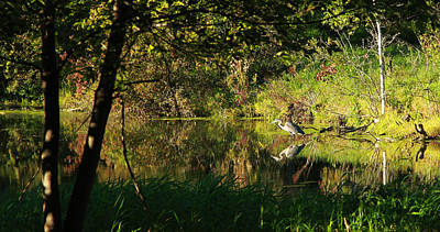 Great Blue Heron Reflecting Art Print by James Hammen