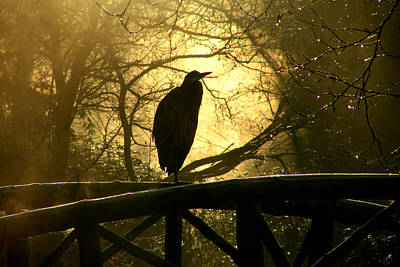 Photograph - Great Blue Heron Silhouette by Brian Chase