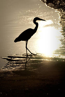 Photograph - Great Blue Heron Silhouette by  Onyonet  Photo Studios