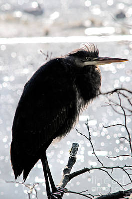 Waterfowl Photograph - Great Blue Heron Silohuette by Terry Elniski