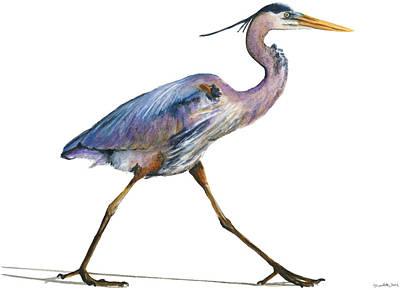 Great Blue Heron Strolling Art Print by Carlo Ghirardelli
