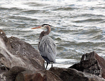 Photograph - Great Blue Heron by Trina  Ansel