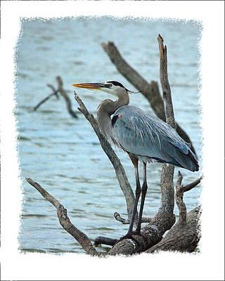 Great Blue Heron Art Print by Wynn Davis-Shanks