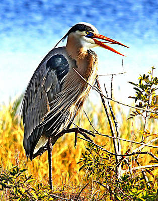 Photograph - Great Blue Portrate by Ira Runyan