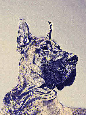 Digital Art - Great Dane- Blue Sketch by Jane Schnetlage