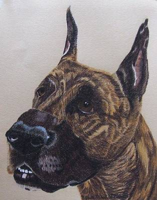 Drawing - Great Dane - Brindle by Anita Putman
