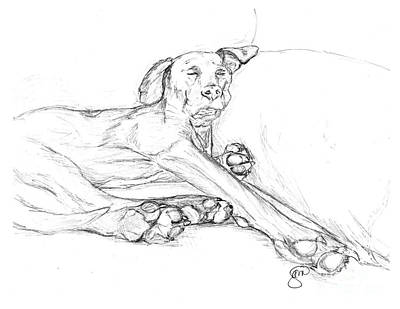 Great Dane Dog Sketch Bella Print by Stacey May