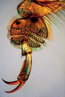 Great Diving Beetle Leg Art Print