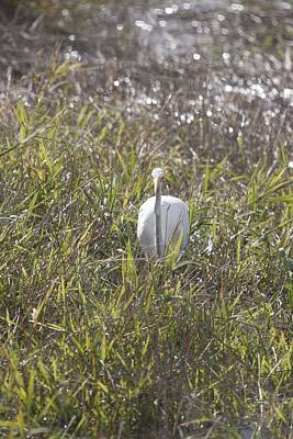Photograph - Great Egret - 0001 by S and S Photo