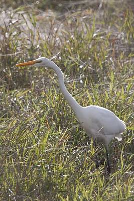 Photograph - Great Egret - 0002 by S and S Photo