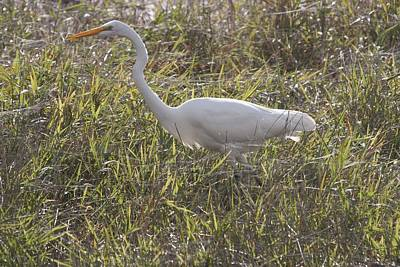 Photograph - Great Egret - 0003 by S and S Photo