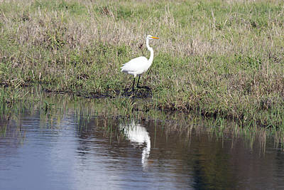 Photograph - Great Egret - 0008 by S and S Photo