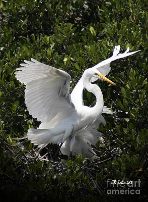 Photograph - Great Egret 03 by E B Schmidt