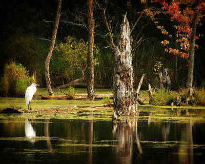 Photograph - Great Egret And Great Blue Heron by Scott Hovind